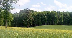 Drettmann Ranch green and yellow flowered field